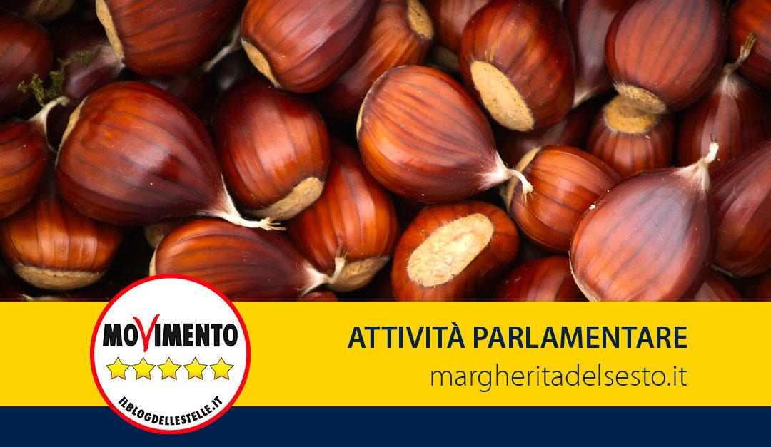 Castagna di Roccamonfina