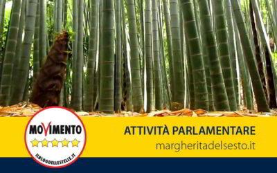 Proposta di legge a mia prima firma sul bambù
